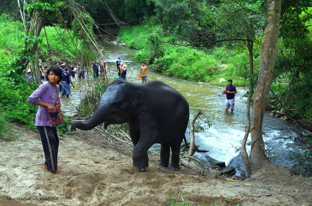 elefanti-0