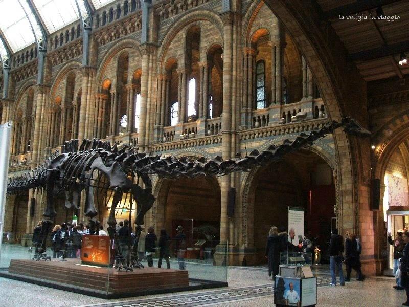 Museo di Storia Naturale, Londra