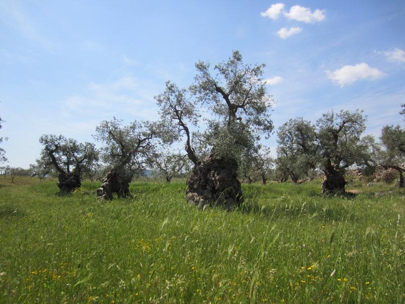 "La ""Valle dei Giganti"" a Massaria Giummetta (Montalbano)"