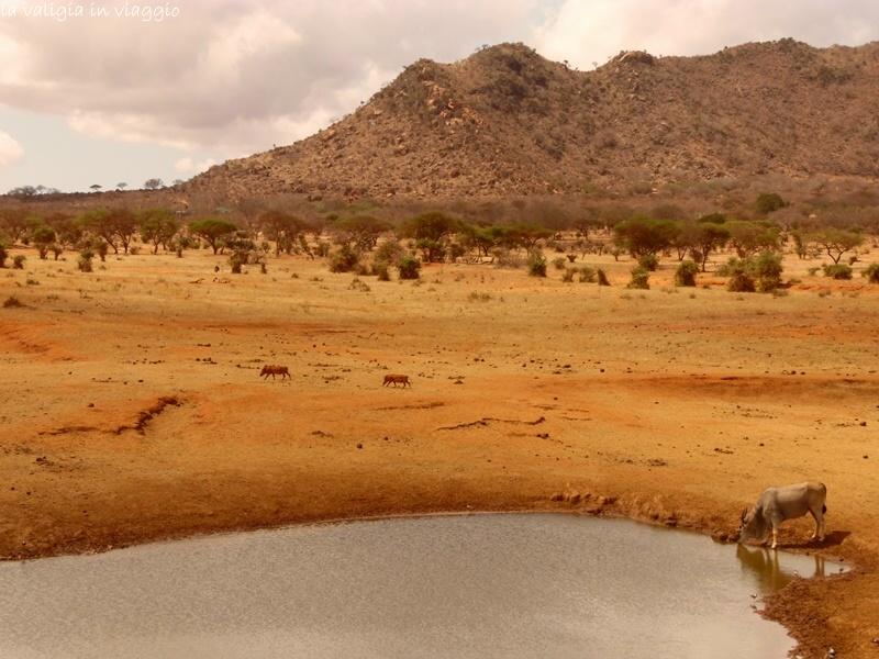 Kenya.10