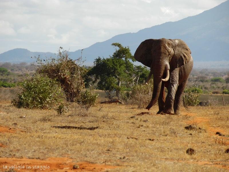 Kenya.11