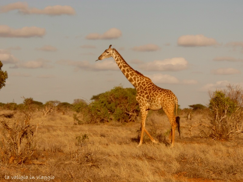 Kenya.13