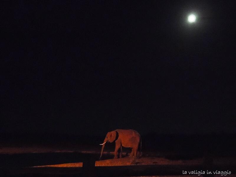 Silenzi, luna piena, barriti degli elefanti, natura, emozioni, Africa.