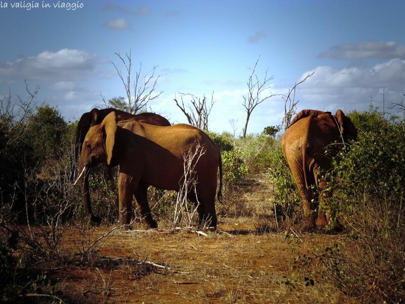 Gli elefanti della Savana