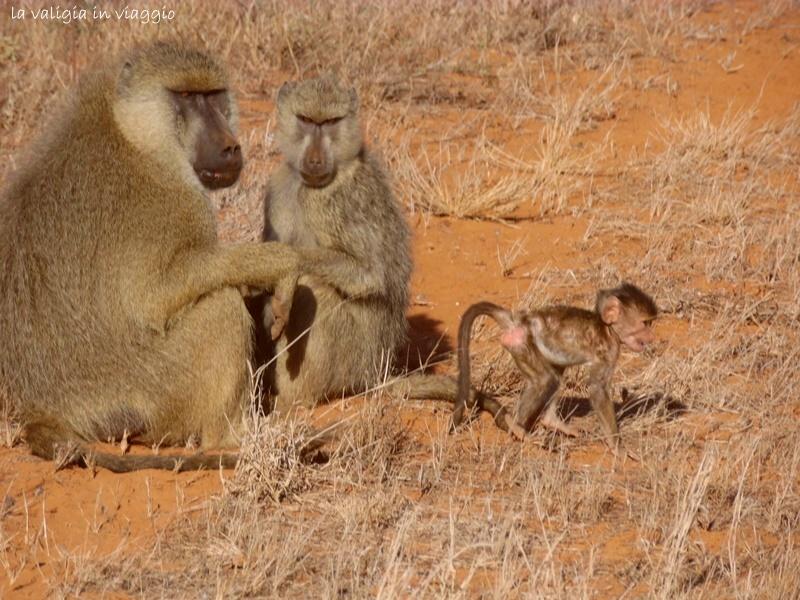 Famiglia nella Savana
