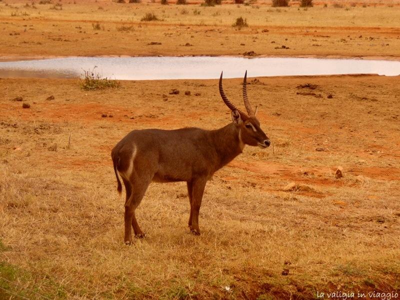 Kenya.9