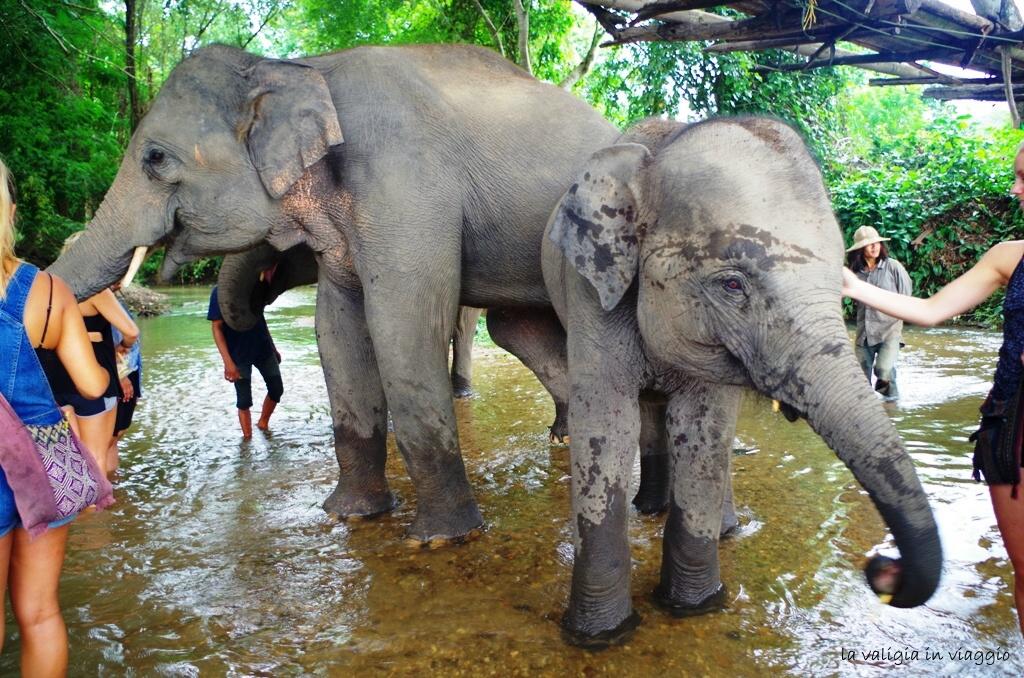 elefanti-4