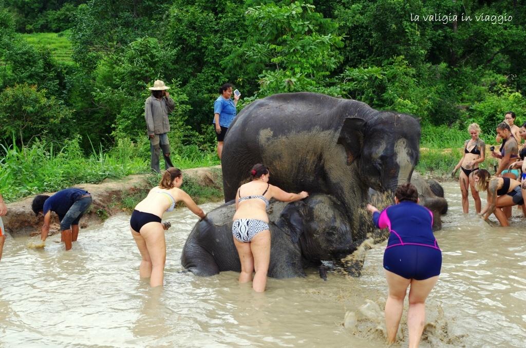 elefanti-7