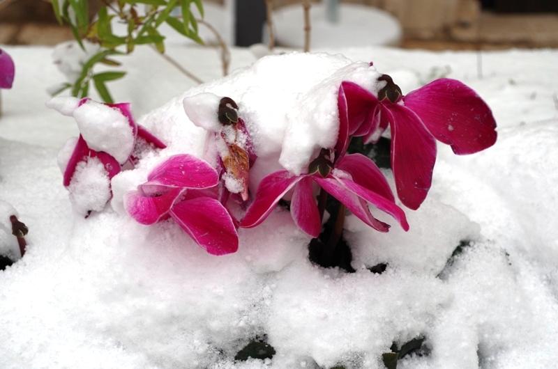 La neve in Puglia