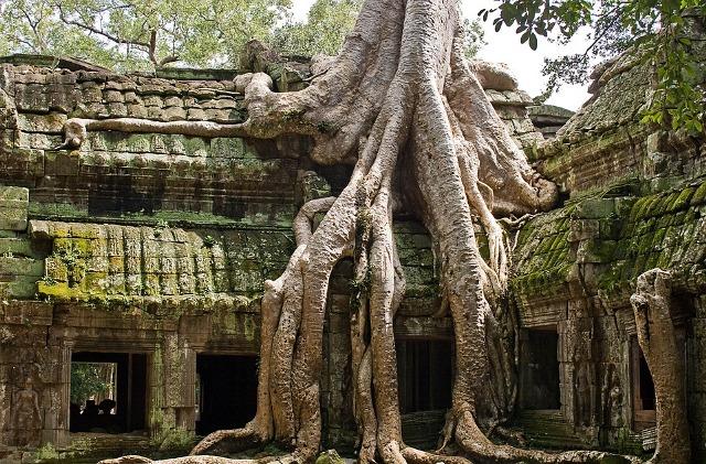 Ta Prohm- Cambogia