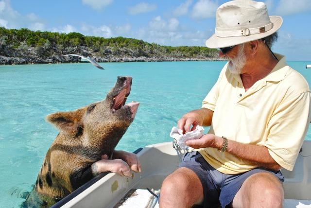 Instagram: dieci spiagge abitate da curiosi animali